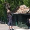 Gratis la Grădina Zoologică şi cu Tursib-ul de 1 iunie pentru copii