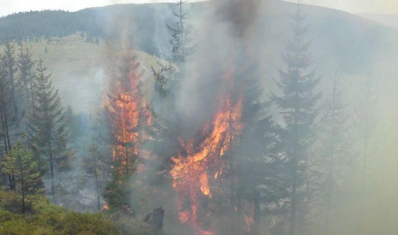 Incendiul de pădure şi vegetaţie de la Păltiniş a fost lichidat